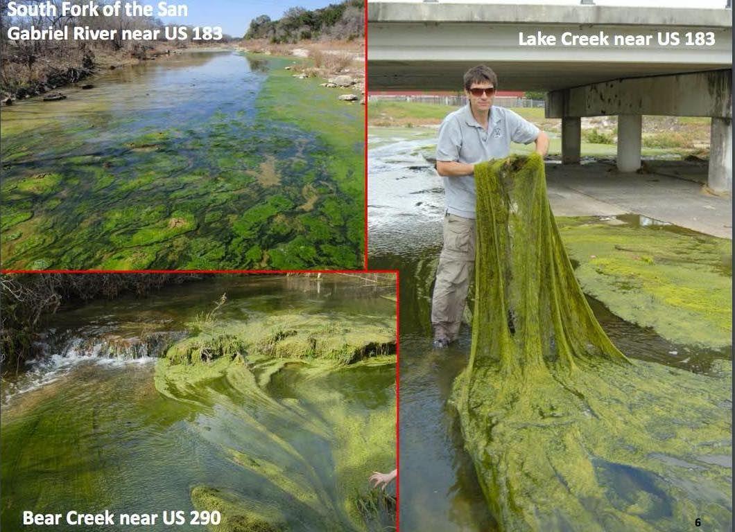 AlgaeBloominCreeks.jpg