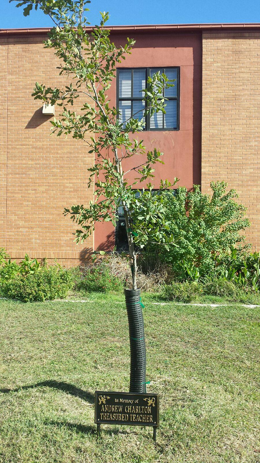 TreeDedication.jpeg