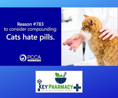 cats hate pills.jpeg