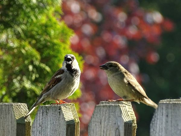 On the Fence about Life Insurance?