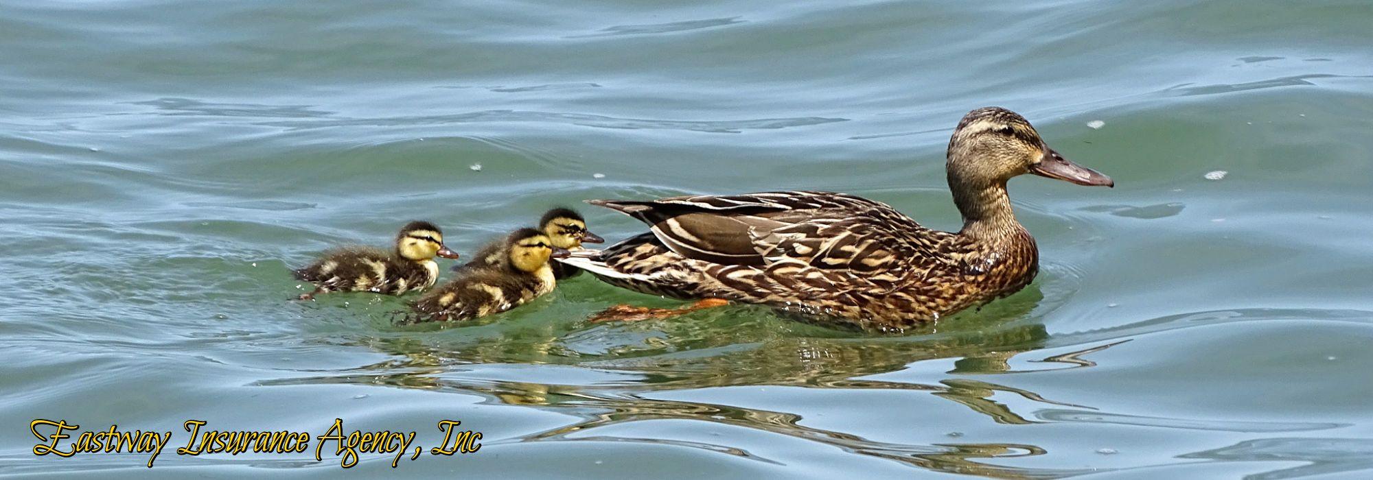 Eastway Ducks In A Row
