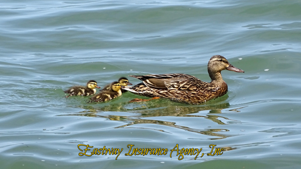 Get Your Ducks in a Row with Eastway