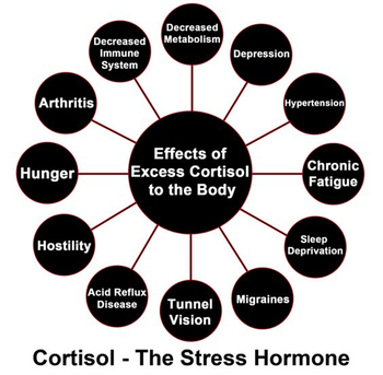 effects of cortisol.jpg
