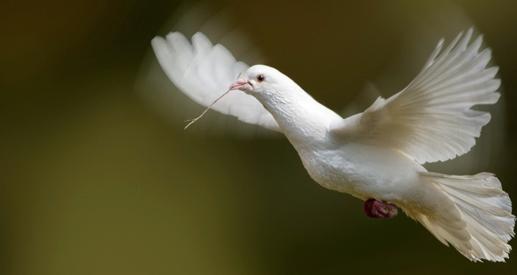White-Flying-Dove.jpeg