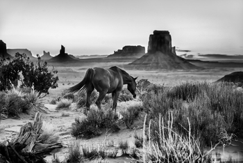 Horses in the Valley-XL.jpg