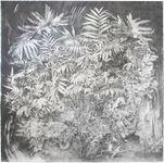 Rachel Wolfson Smith - Fossils
