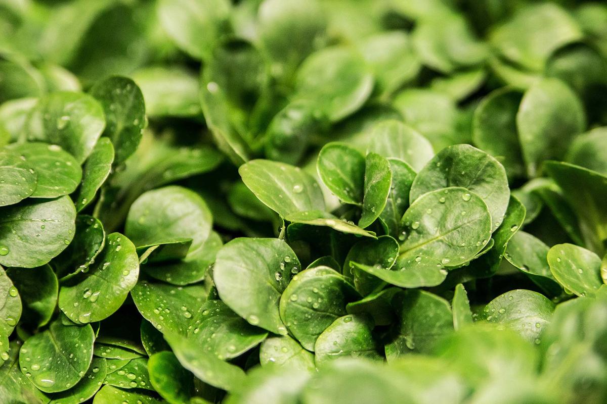 salad-264826.jpg