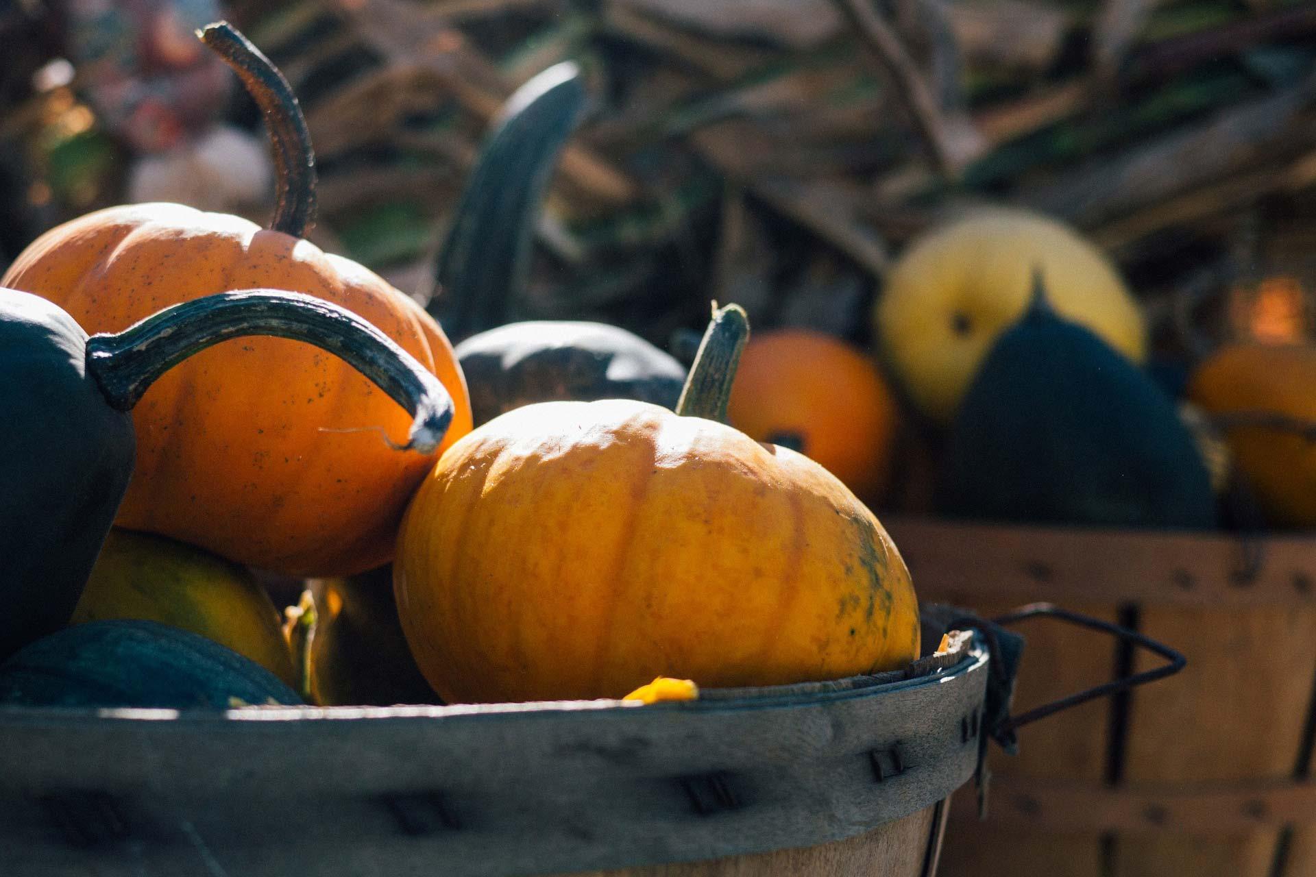 pumpkin-1031292_1920.jpg