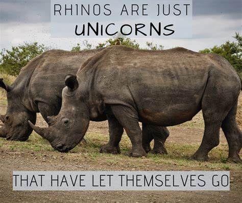 Unicorns rhino.jpeg