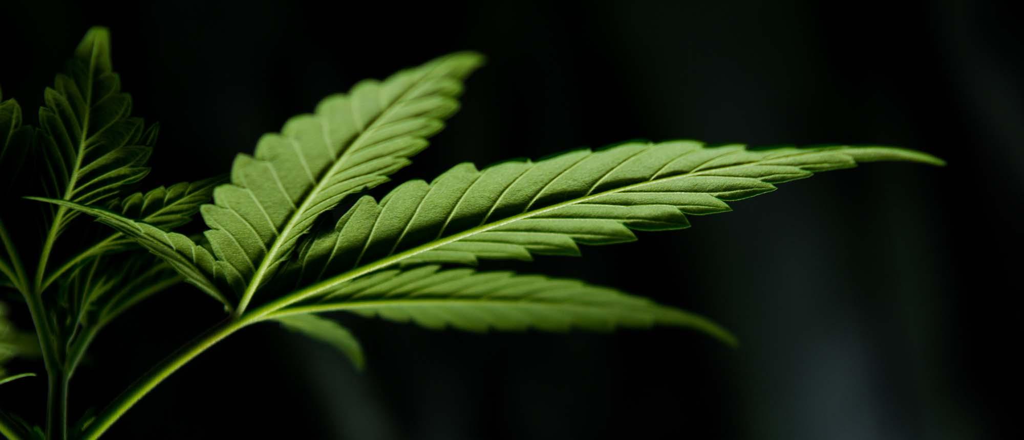 salem medical marijuana doctor
