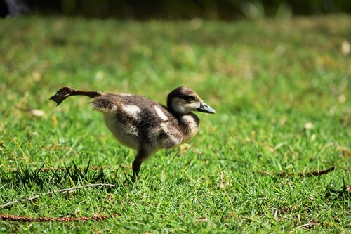 Yoga Duck.jpg