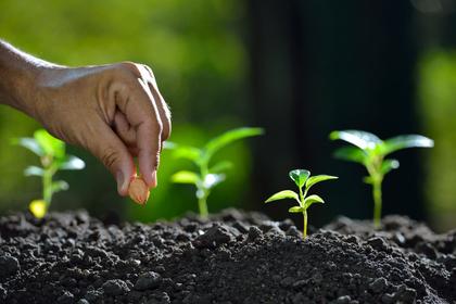 planting_seeds.jpg