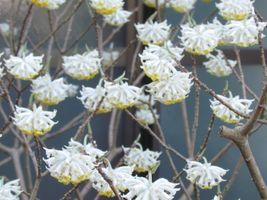 karen-hembree-spring-koyasan-garden-blooms.jpg