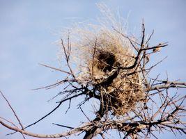 karen-hembree-winter-empty-nest.jpg