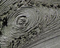 karen-hembree-fall-tree-rings.jpg