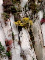 karen-hembree-fall-sheer-beauty.jpg