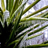 winter-icy-yucca.jpg