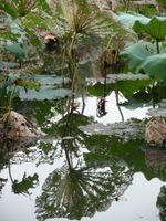 karen-hembree-fall-lace-reflection.jpg