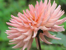 karen-hembree-fall-cinque-terre-bloom.jpg
