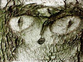 karen-hembree-fall-tree-face.jpg