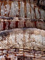 karen-hembree-spring-trunk-texture.jpg