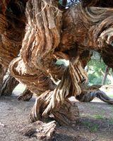 karen-hembree-winter-twisted-trunk.jpg