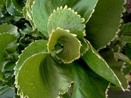 karen-hembree-spring-unfolding.jpg