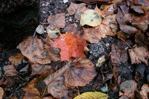 karen-hembree-fall-salzburg.jpg