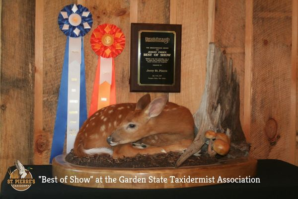 Whitetail Fawn Comptetition Piece