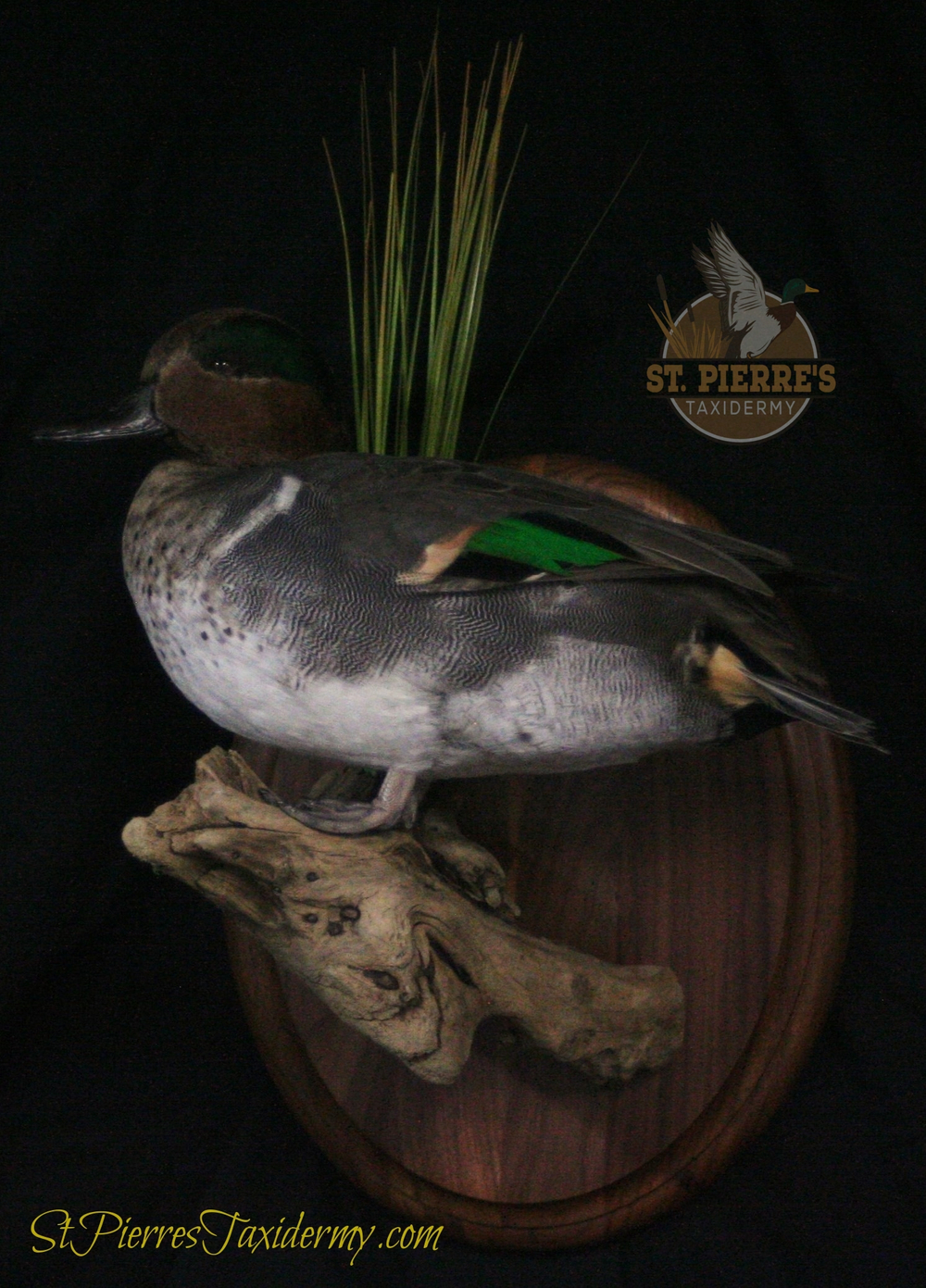 Green-winged Teal Mount Perched on Piece of Wood - Bird Taxidermy