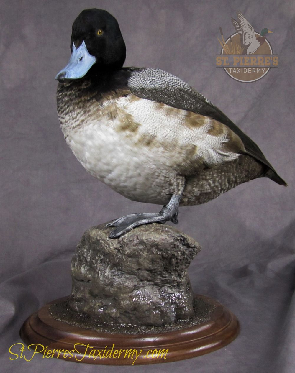 Bluebill (Scaup) Mount Standing on a Rock - Bird Taxidermy