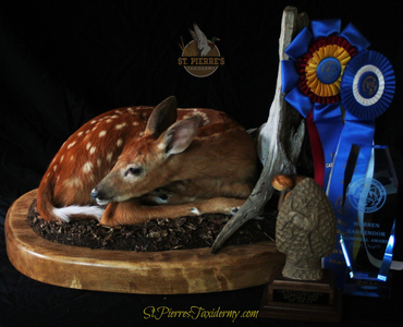 Whitetail Fawn - About St. Pierre's Taxidermy
