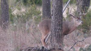 Deer Hunt 1 Thumbnail.jpg