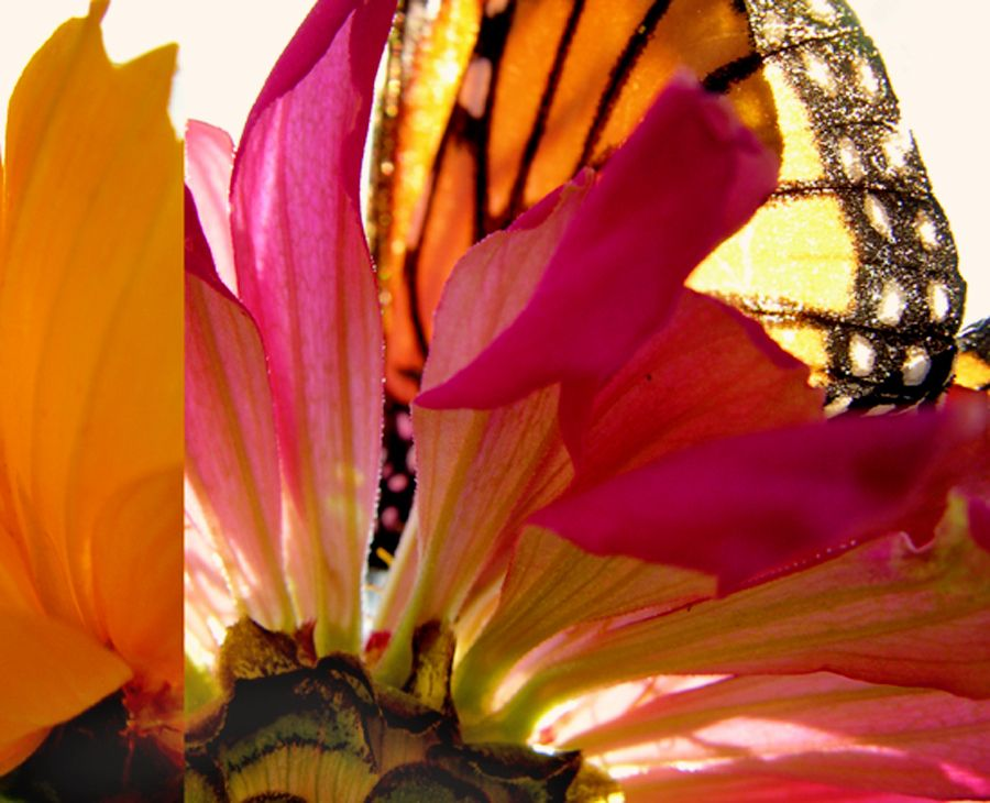 Biota Collage, Monarchs, detail