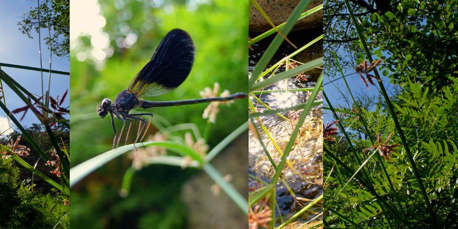 Biota Collage: Blue Dragonfly, detail