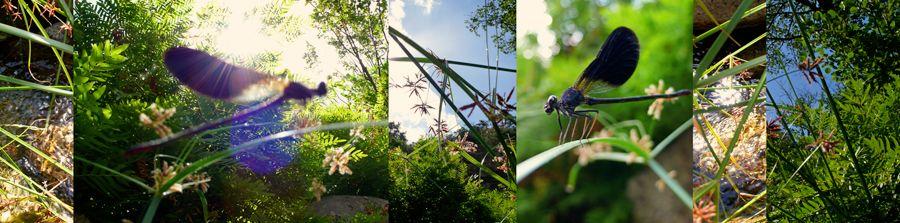 Biota Collage: Blue Dragonfly