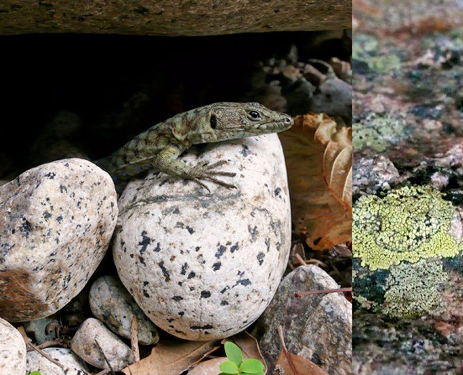 Biota Collage, Green Lizard, detail