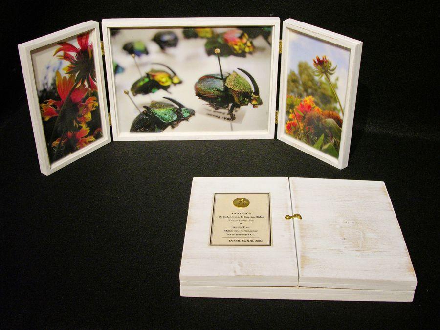 Biota Box 90: Rainbow Scarabs and Blanket Flower