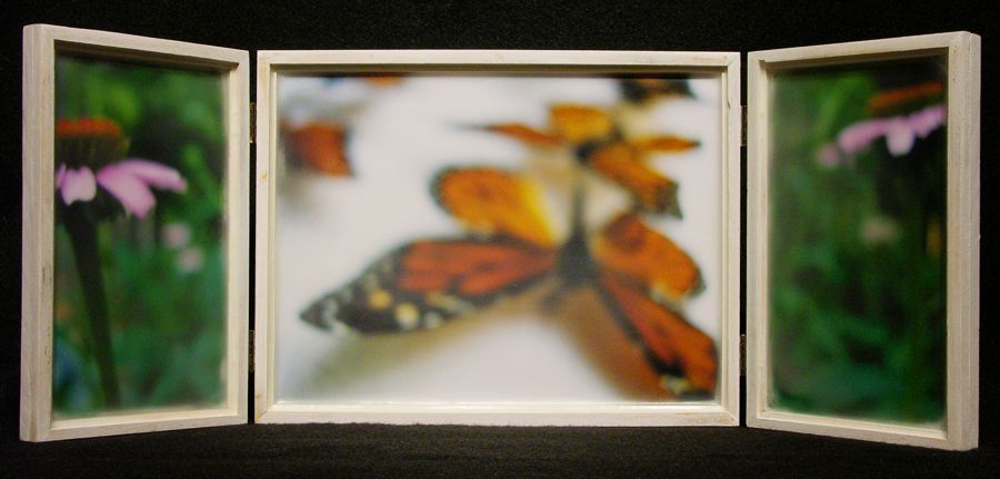Biota Box 25: Monarchs and Echinacea