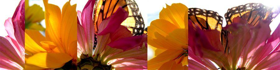 Biota Collage, Monarchs