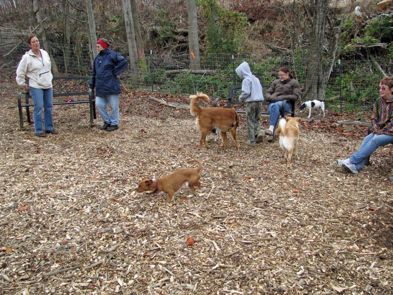 dog park 2 copy.jpg