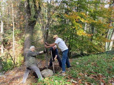 carolyn ashburn - SCLT tree planting copy 2.jpg
