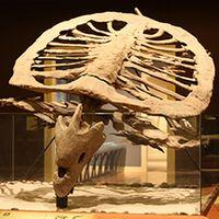Mayborn fossils