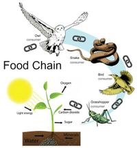 food chain.jpg