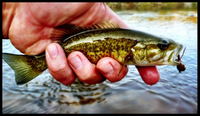 Guadalupe-Bass-Small-610x355.jpg