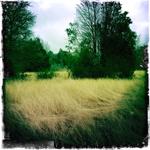 Elgin land6.jpg