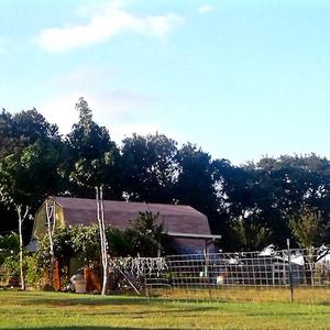 613 Upper Elgin Barn to House 2 480sq.jpg
