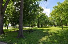 1001 Shady fr Govalle Park (edit hi DSC_0370).jpg