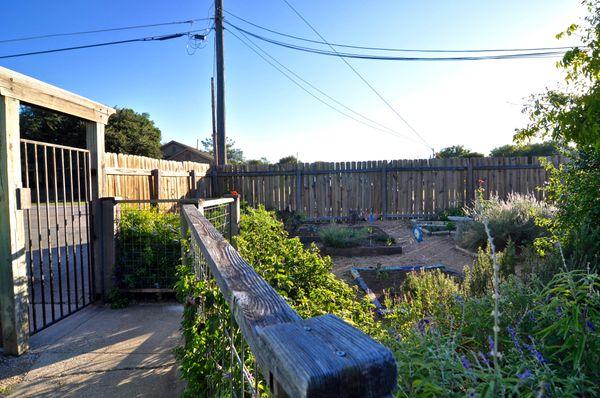 7809 Brodie side gate garden (edit hi DSC_0666).jpg