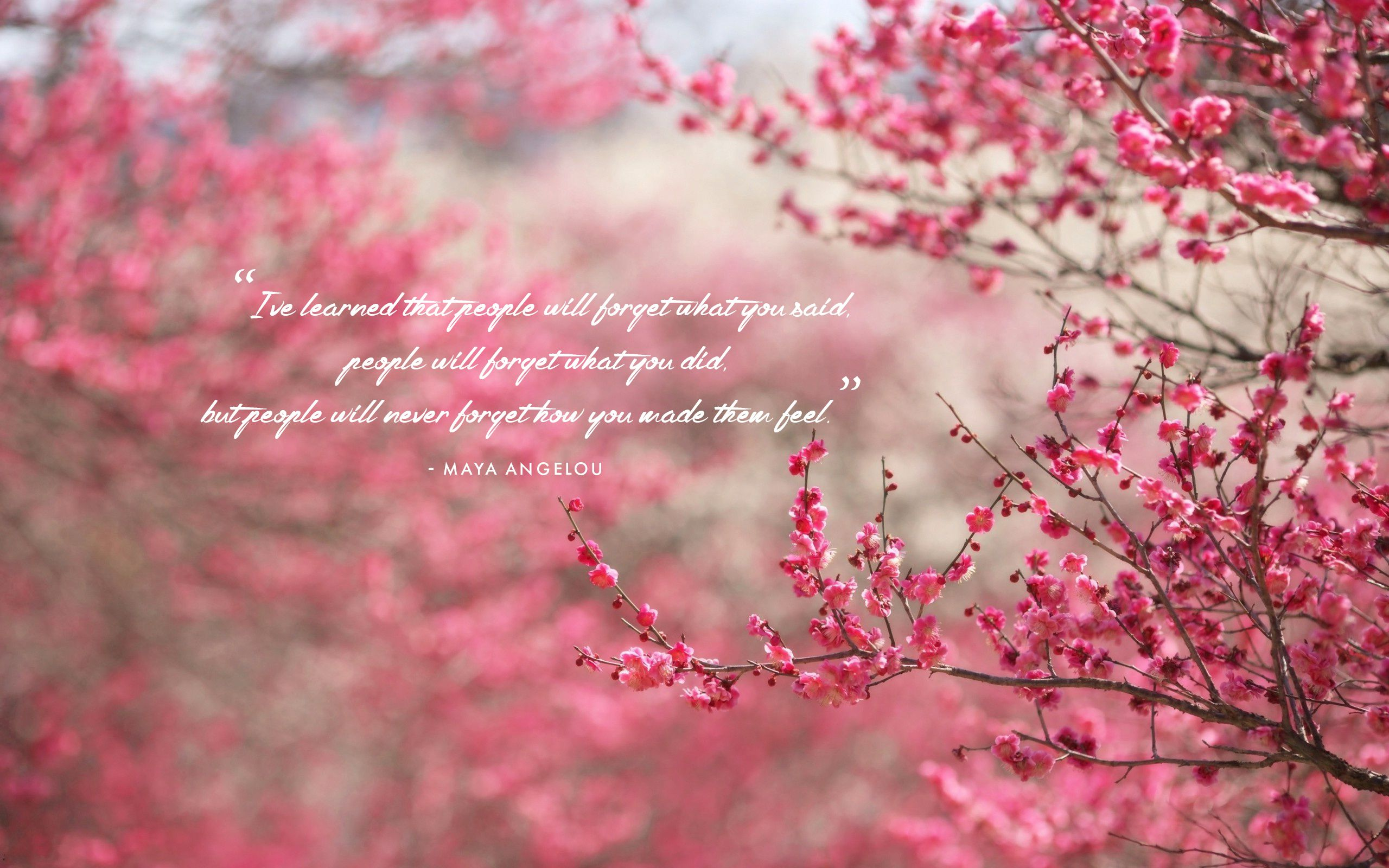 pink flowers w quote.jpg